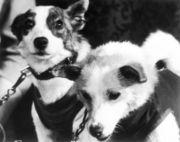 Sputnik 5 Dogs, Strelka and Belka