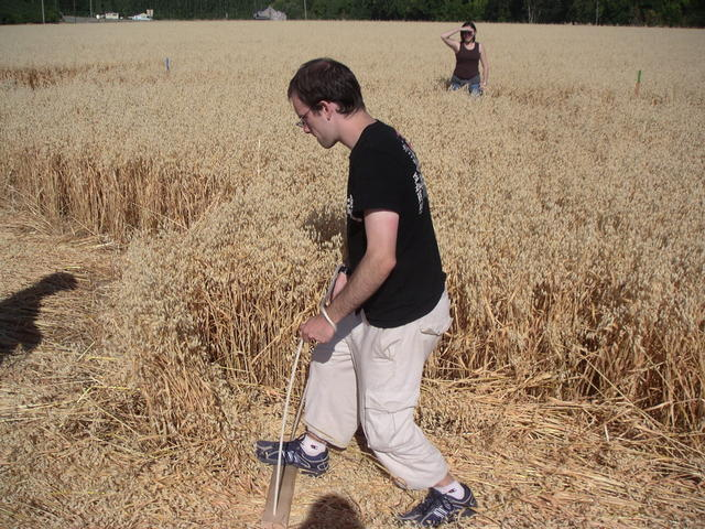 Stomping down the crop circle