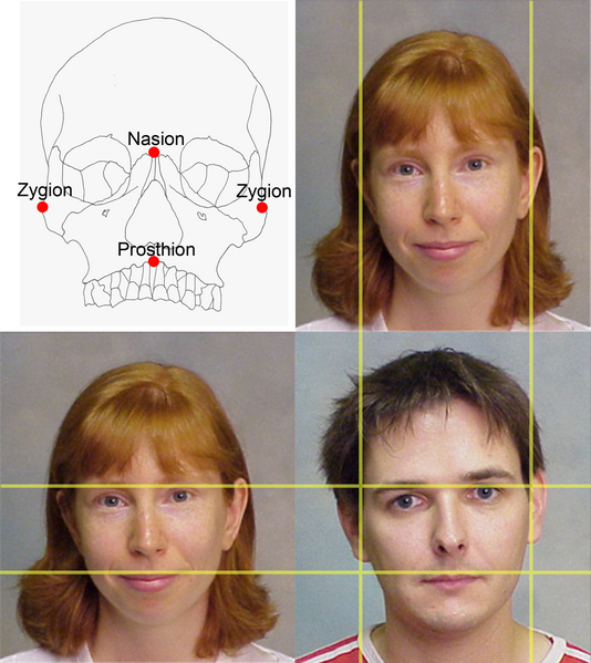 Did Men's Faces Evolve To Be More Attractive To Women ...