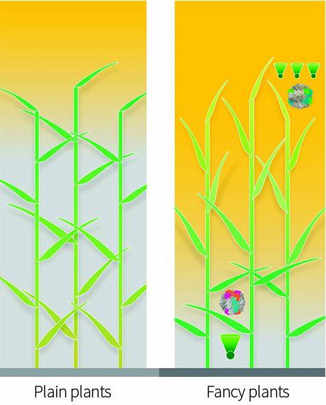 Smart Cornfields: Photosynthesis Hacks Optimize Food
