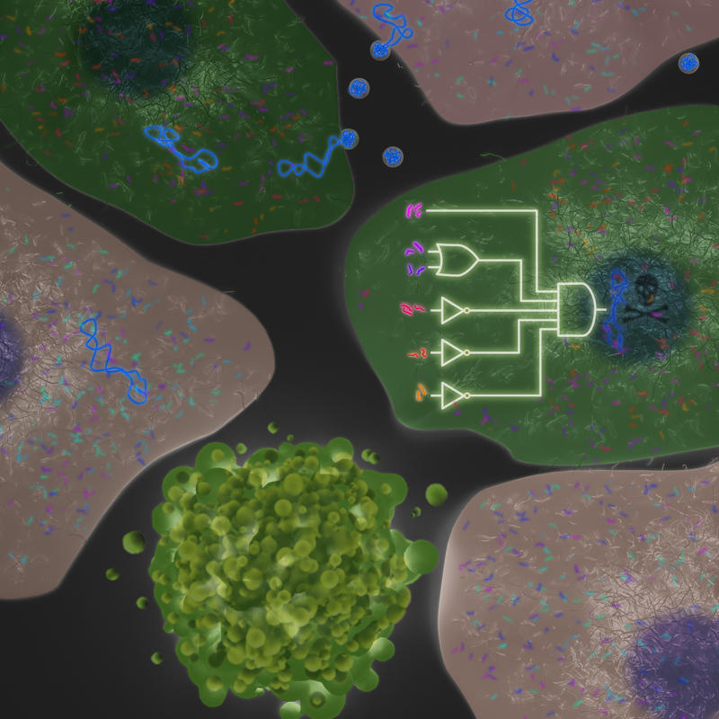 Biological Computer Identifies And Kills Cancer Cells