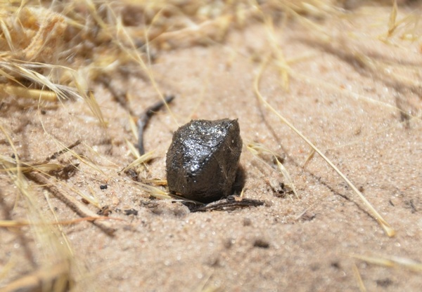 Motopi Pan Meteorite That Hit Botswana Came From The Giant Asteroid  Vesta