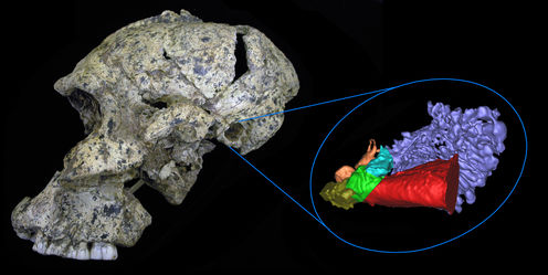 What Fossilized Ear Bones Tell Us About Ancient Human Hearing
