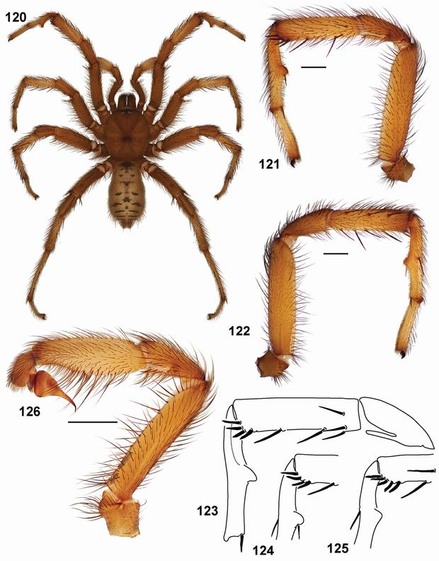 33 New Trapdoor Spider Species Published In Zookeys
