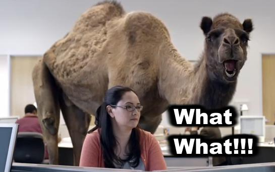 Camel What What