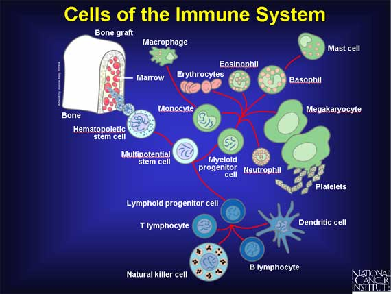 Immune System And Iron - What Is Going On?
