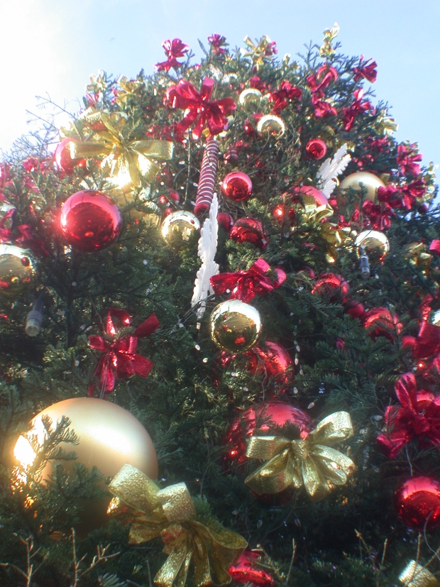 Fisherman's Wharf Christmas Tree
