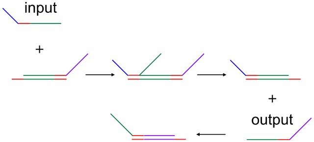 DNA Computer Calculates Square Roots