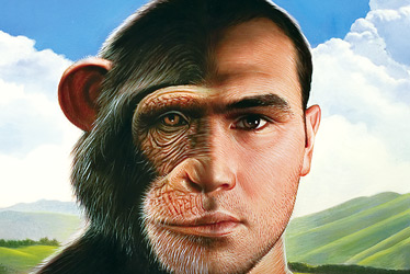 Gene Regulation And The Difference Between Human Beings And Chimpanzees