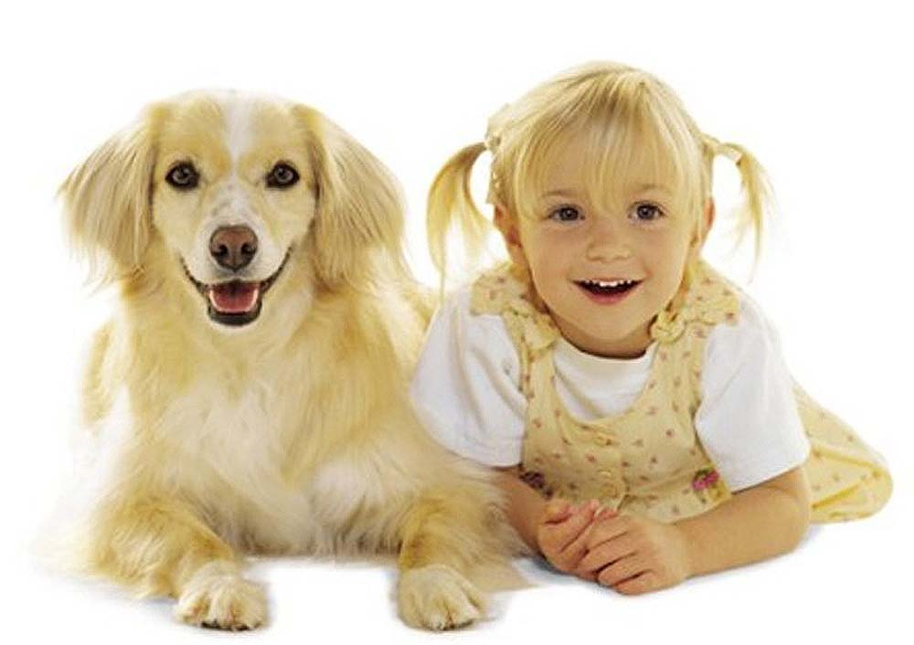 Why Do Dogs Look Like Their Owners?