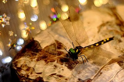 Dragonflies: Giants of the Past