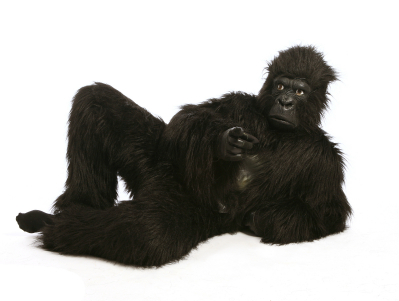 Do We Only See What We Want To See? Experts  Don't Notice A Gorilla In Their Midst...