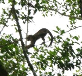 Voyage to the Amazon Part 1: Monkeys
