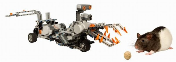 LEGO Mindstorms robot programmed to simulate predatory attack on a rat seeking food