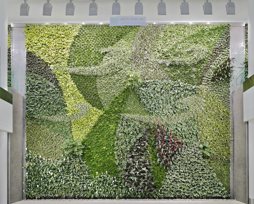 Living Wall At Edmonton International Airport Courtesy Green Over  Grey/Merle Prosofsky