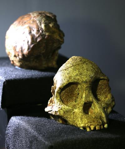 Australopith: Taung Child Was Not Human, Finds Study