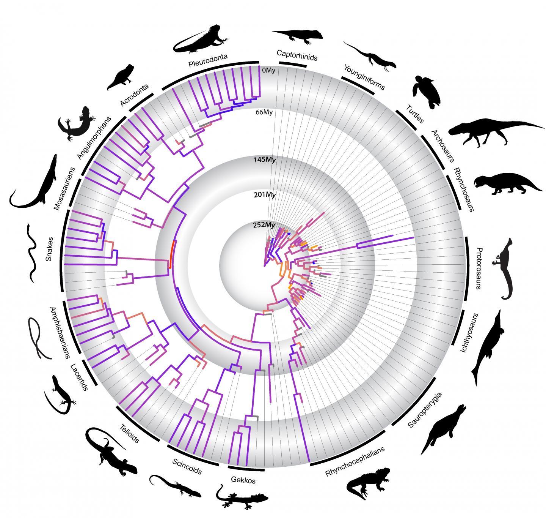 How Adaptive Radiation Shaped Reptile Evolution