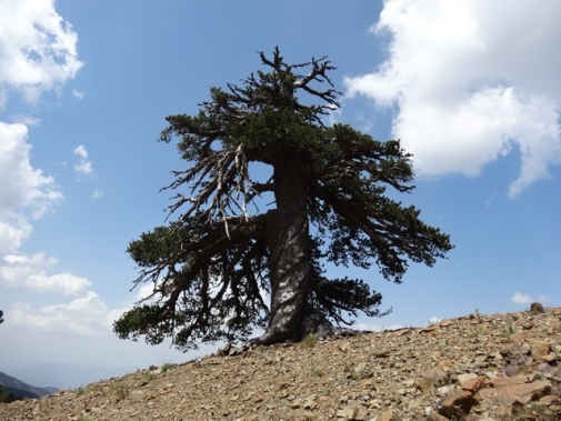 Adonis At 1075 Years: Europe's Oldest Known Living Inhabitant