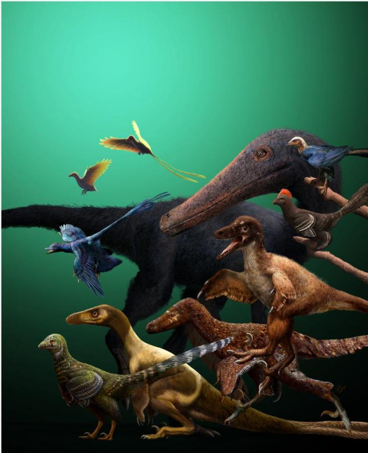 Flying Dinosaurs: Anchiornithine Theropods As The Earliest Birds