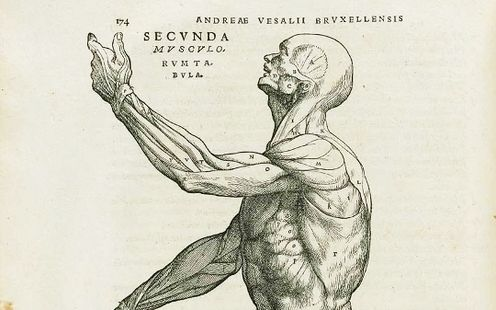 Andreas Vesalius: 500th Birthday Of The Man Who Revolutionized Our Knowledge Of The Human Body