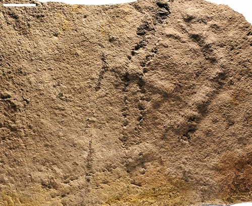 540 Million Years: Oldest Footprints On Earth Discovered