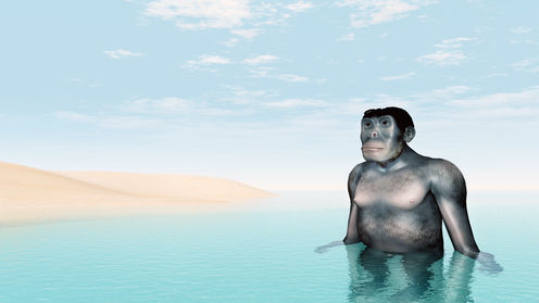 Sorry David Attenborough, We Didn't Evolve From Aquatic Apes