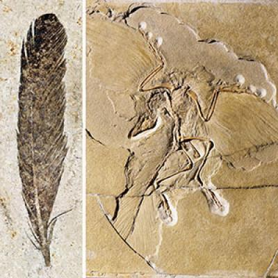 How To Determine The Color Of The Ancient Archaeopteryx Wing