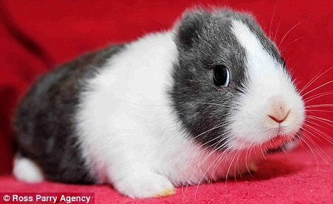 Meet the Earless Fukushima Bunny