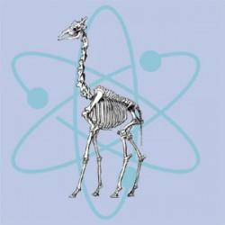 Recalculation of giraffe height