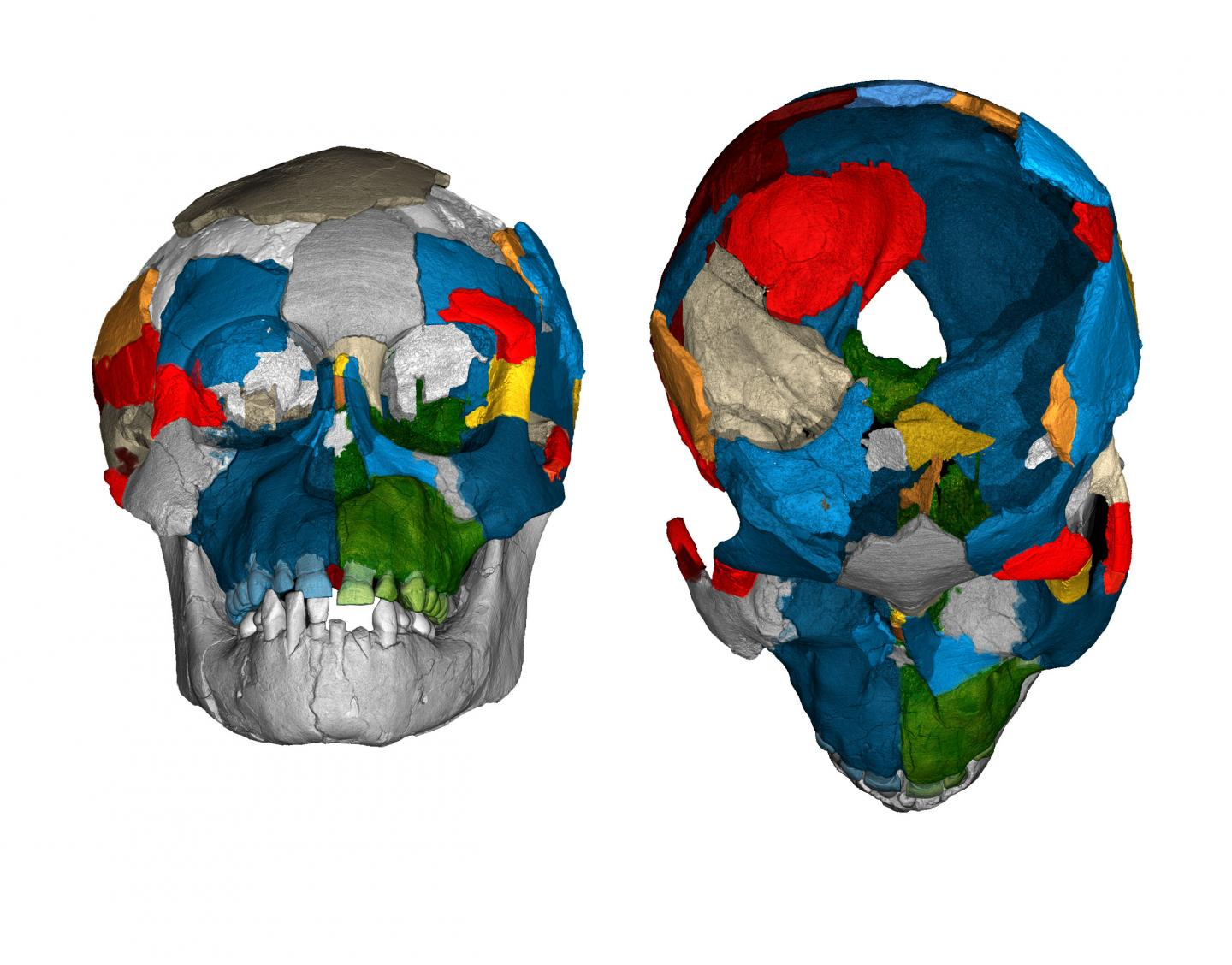 What Brain Images Of The Three-Million-Year Old Lucy Species Just Revealed