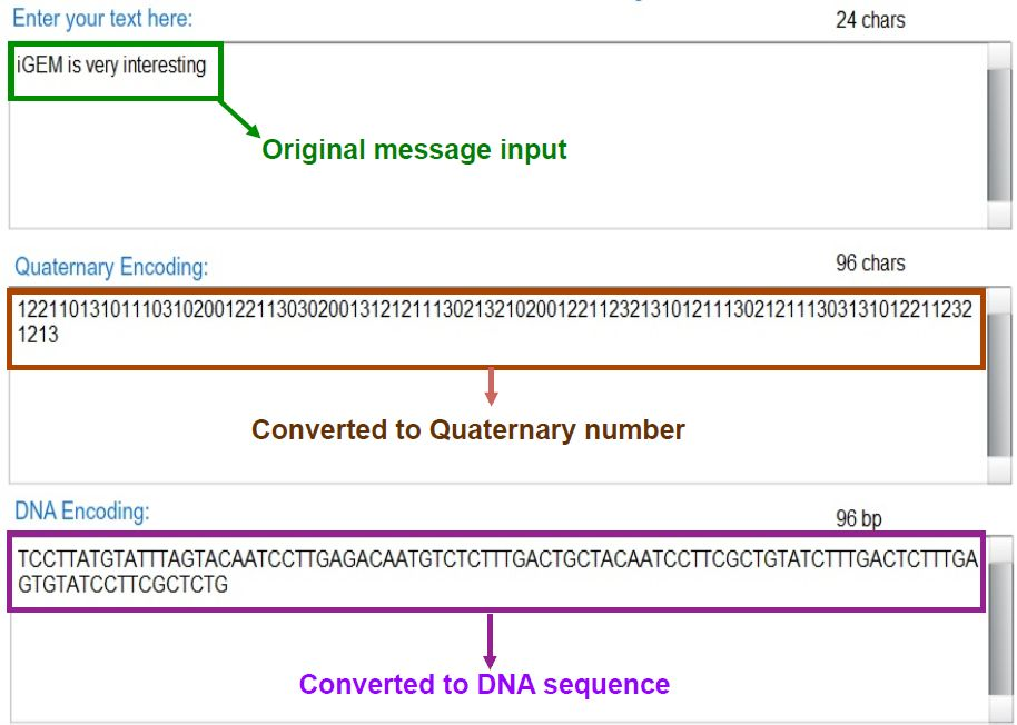 bacteria as a hard drive text to quaternary to dna