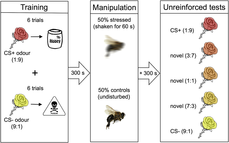 The Emotional Life Of Bees
