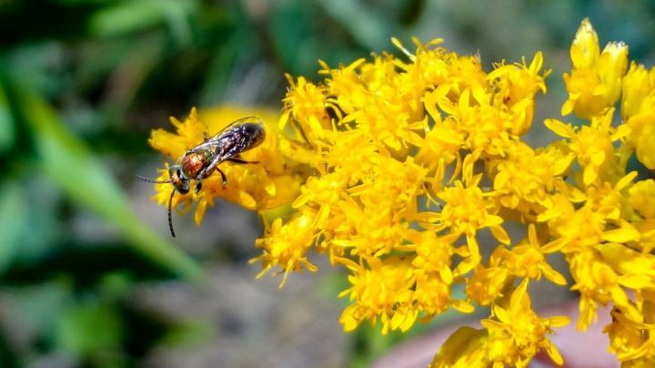 Farmland Improves Bee Health