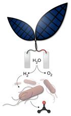Bionic Leaf Uses Bacteria To Convert Solar Energy Into Liquid Fuel