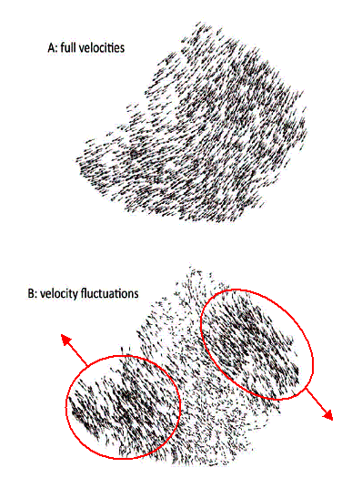 Velocities (top), and velocity fluctuations (bottom) in the same flock at the same instant of time. For clarity, the velocity arrows in the lower plot have been scaled up.