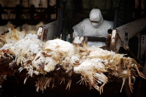 5 Important Things To Know About Bird Flu