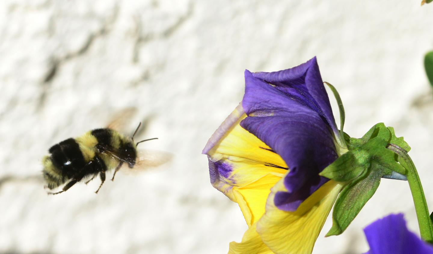 No One Talks About How Flowers Are Killing Bees