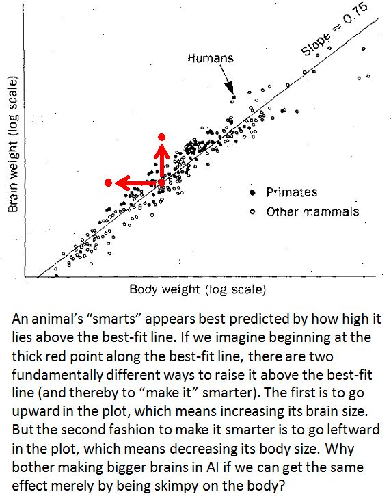 brain weight best fit  line primates