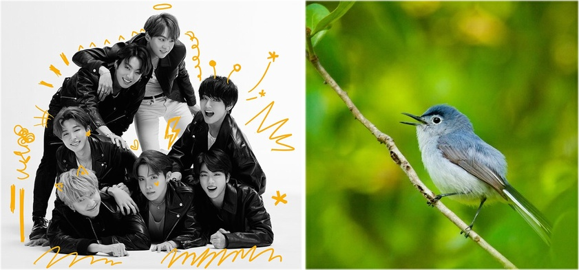 How Bird Flocks With Multiple Species Behave Like BTS And Other K-Pop Groups
