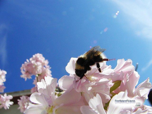 Australia's  4 billion dollar bee industry at imminent risk from locust spraying