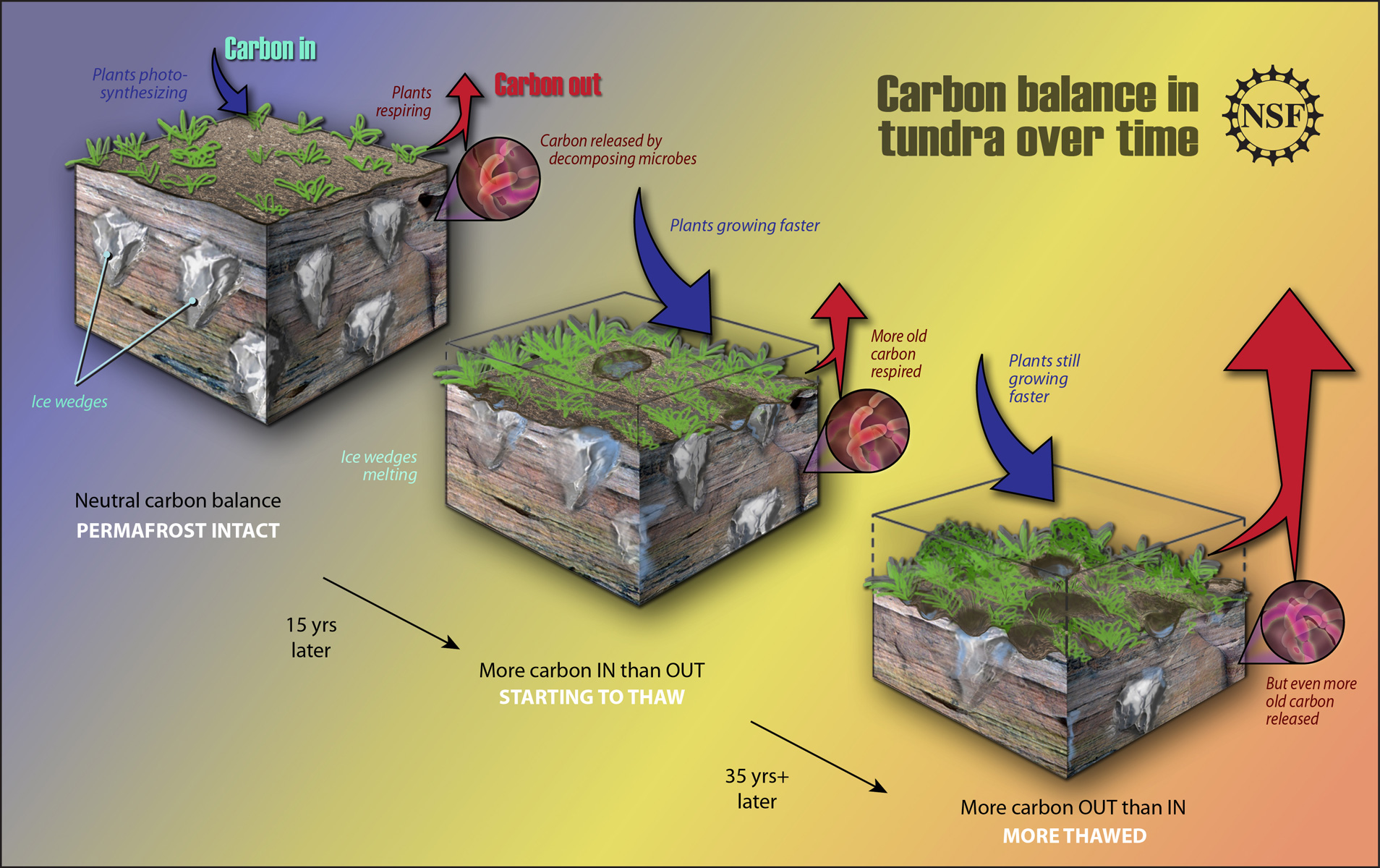 Arctic double whammy carbon release from thawing for 0 4 soil carbon