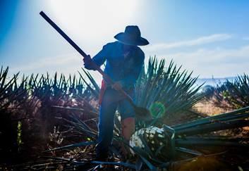 Earth Day Tequila: Toxic Carcinogen Maker Casa Herradura Is The Way To Go
