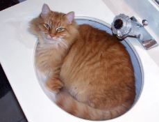The Rheology Of Cats (are They Liquid Or Solid), The Deborah Number, And How It Won An Ig Nobel Prize