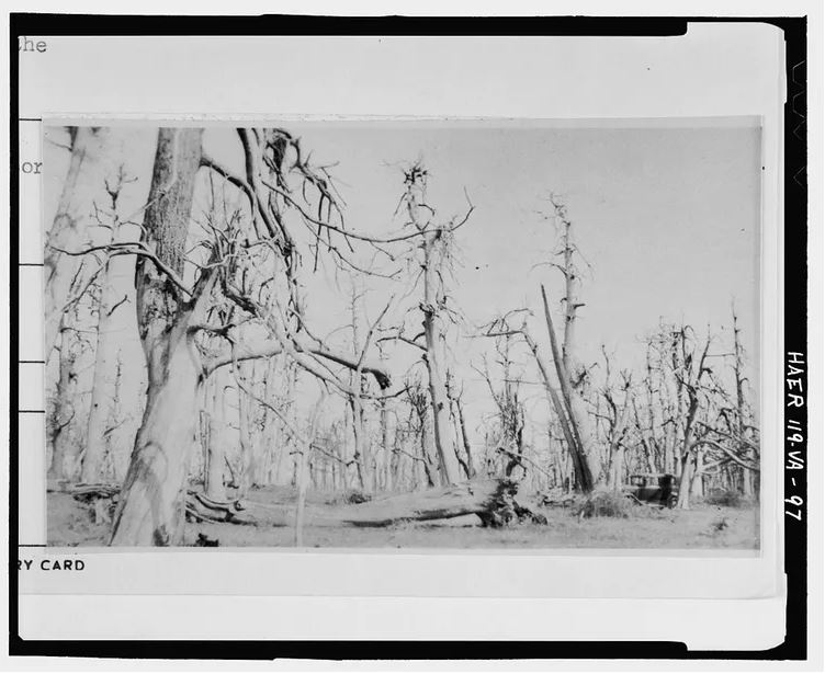 chestnut ghost forest 0.