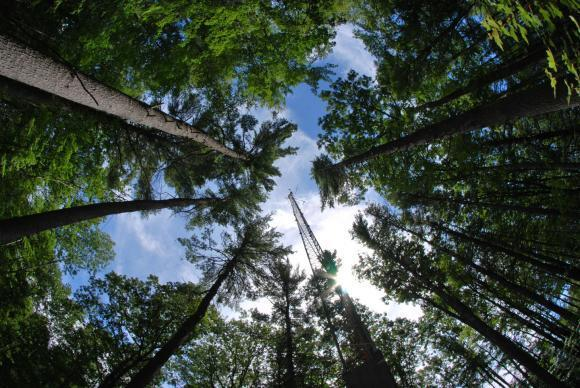 Chlorophyll Fluorescence: Forest Glow Of Photosynthesis Activity Can Be Tracked From Space
