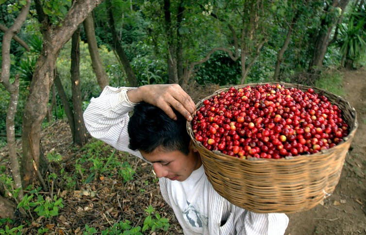 COVID-19 Pandemic And Declines In Coffee Consumption Have Left Millions Struggling To Make A Living