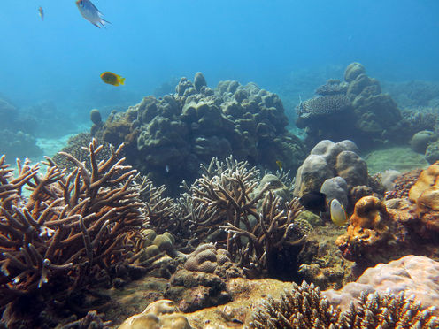 Obituaries For Coral Reefs May Be Premature