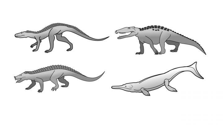 Why Haven't Crocodiles Evolved Much Since The Age Of The Dinosaurs?