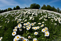 Daisyworld, by Nic Launceford on Flickr