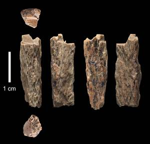 Denisova 11 - Girl Had A Neanderthal Mother And Denisovan Father